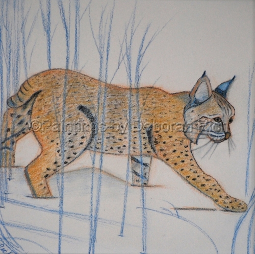 Bobcat by  PAINTINGS BY DEBORAH RICH
