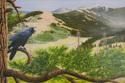 Raven in Yellowstone (thumbnail)