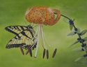 Swallowtail on Tiger Lily (thumbnail)