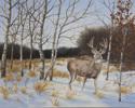 Buck in Winter (thumbnail)