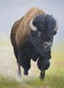 Full Speed Ahead - Bison (thumbnail)