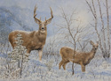 Buck and Doe in snowstorm (thumbnail)