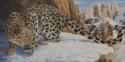 Snow Leopard (thumbnail)