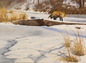 Red Fox in winter (thumbnail)