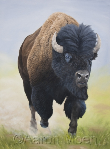 Full Speed Ahead - Bison