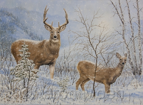 Buck and Doe in snowstorm