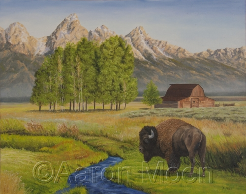 Bison at Tetons