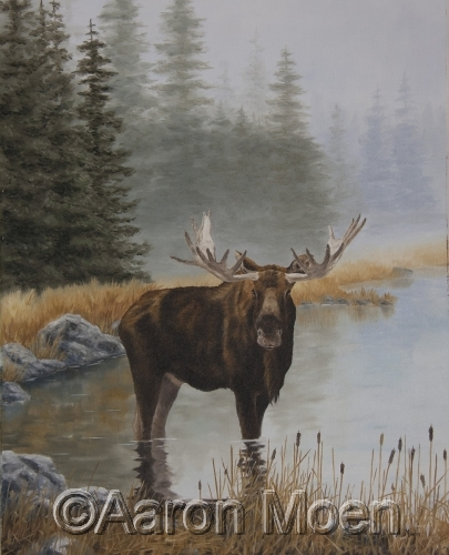 Moose, mist and cattails