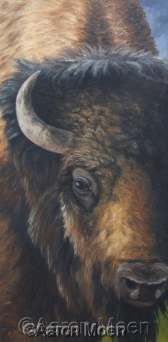 Buffalo close encounter