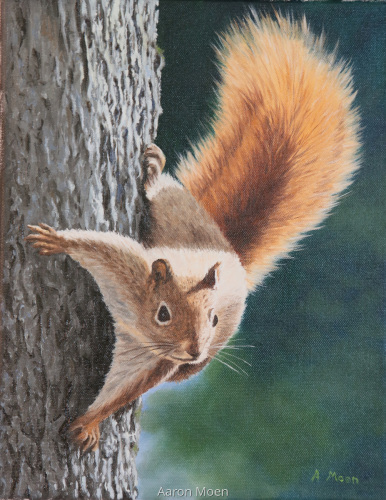 Red Squirrel 2