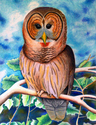 Painting-Owl 1