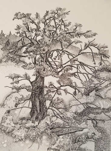 Pen & Ink Tree