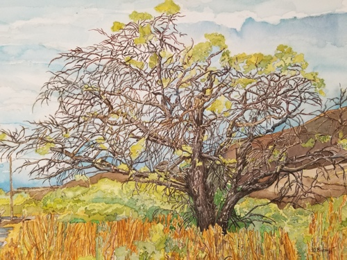 Oak Tree by Anita Bischoff