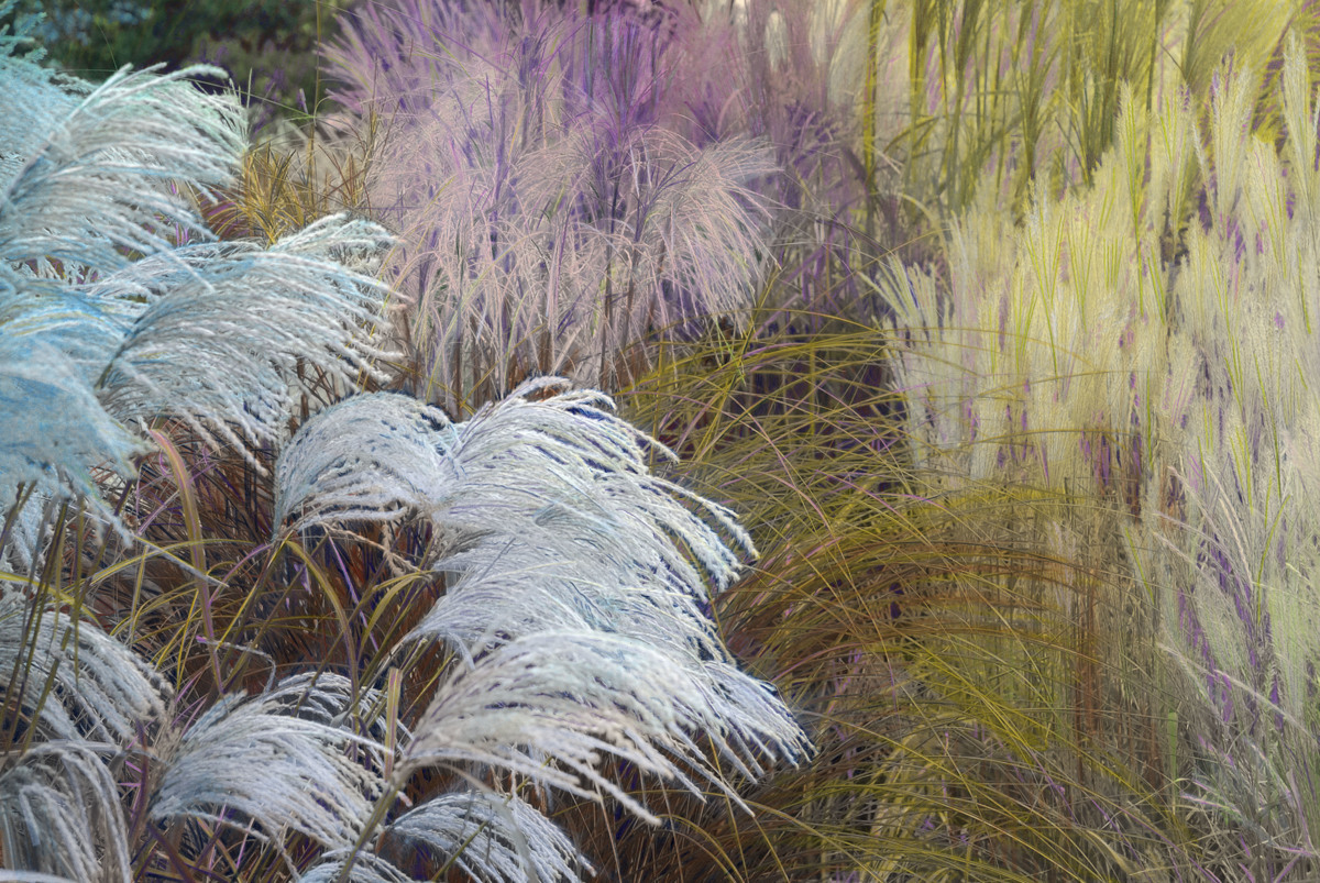 Grasses (large view)