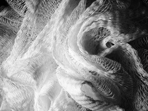 Jellyfish 1  by Marisa D. Aceves