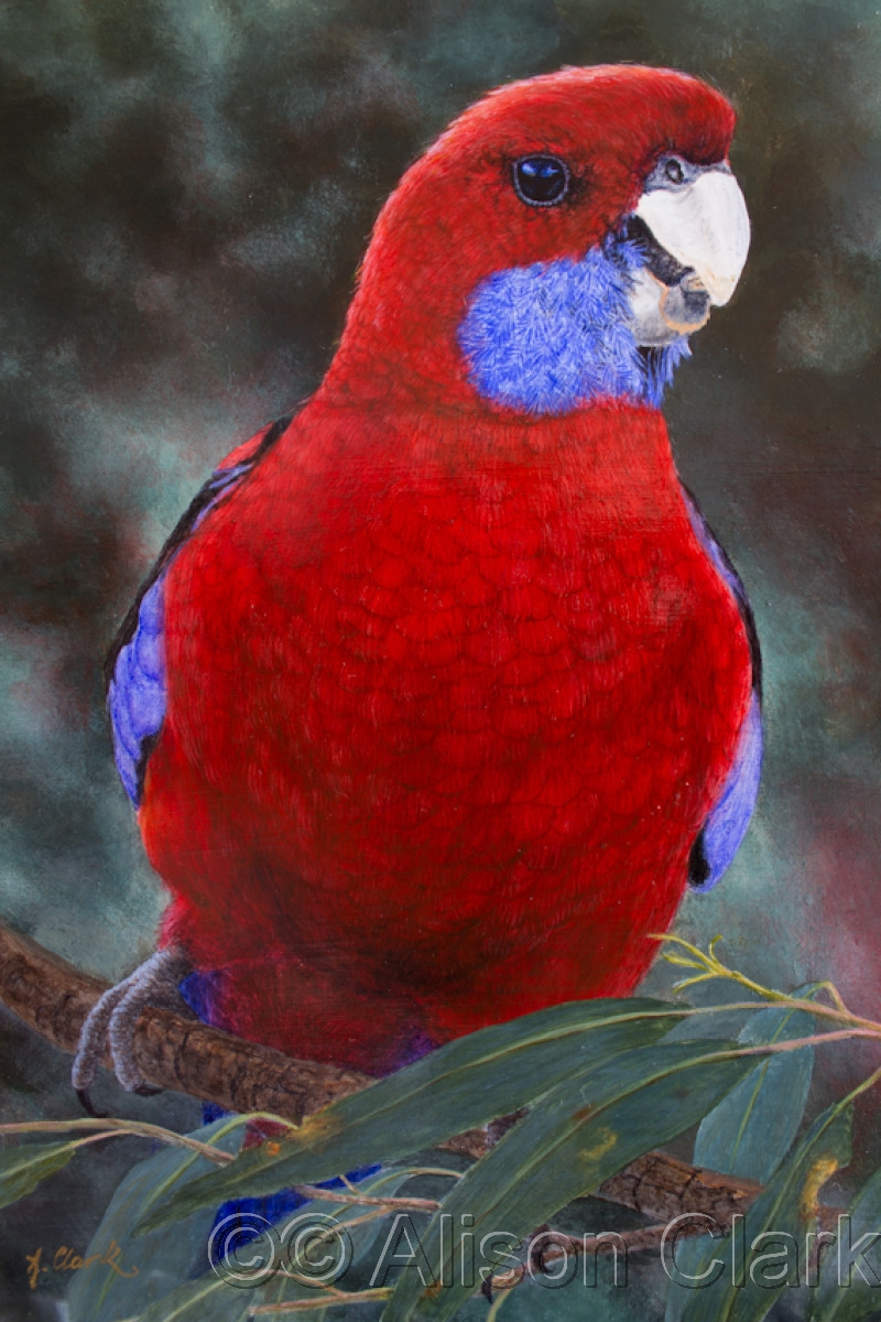 The Cheeky Seed-Eater (Crimson Rosella) (large view)