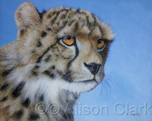 Cheetah cubs in South Africa, pastel. (large view)
