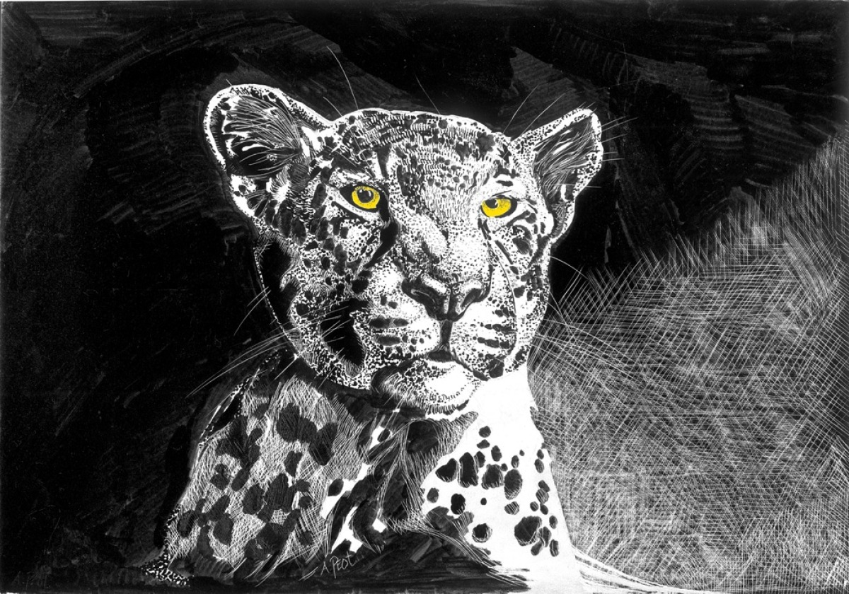 adam peot art painting of a bleach and white leopard scratchboard with yellow eyes (large view)