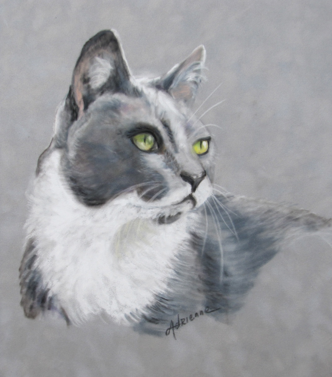 Gray Cat (large view)