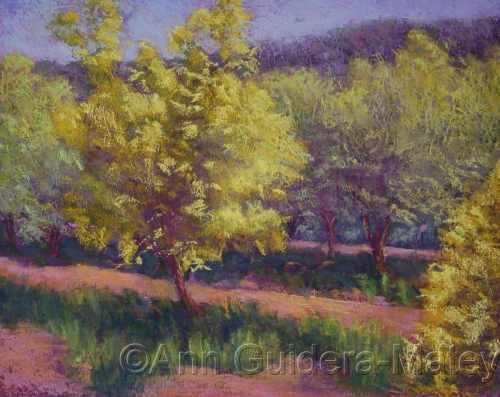 Olive Groves - Yellow and Purple