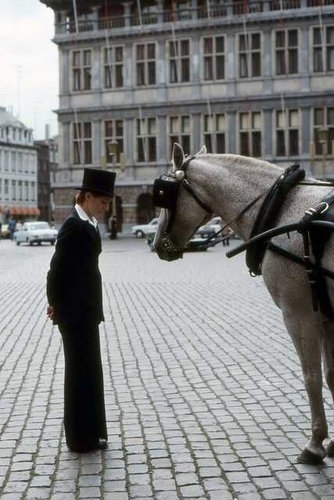 Carriage Horse and Rider in Brussels
