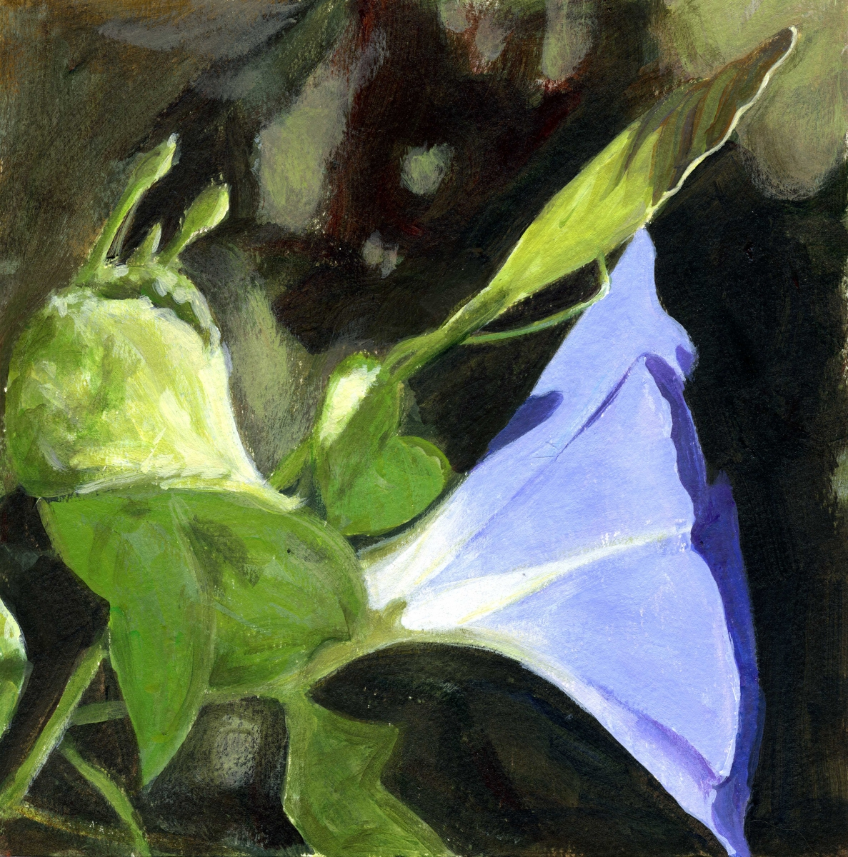 intimate view of morning glory, heavenly blue (large view)
