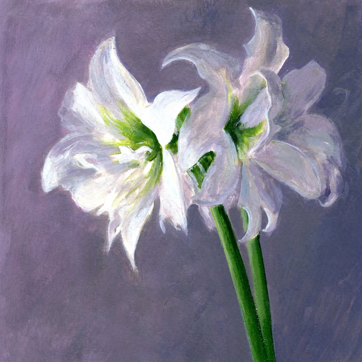 intimate view of white amaryllis (large view)