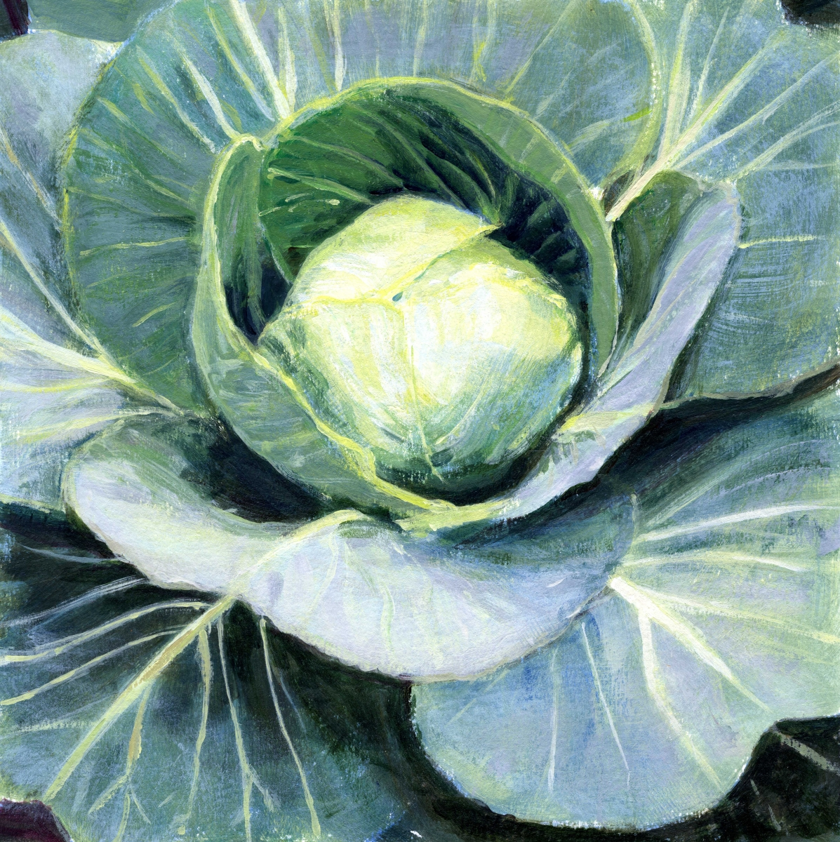 intimate view of cabbage head (large view)