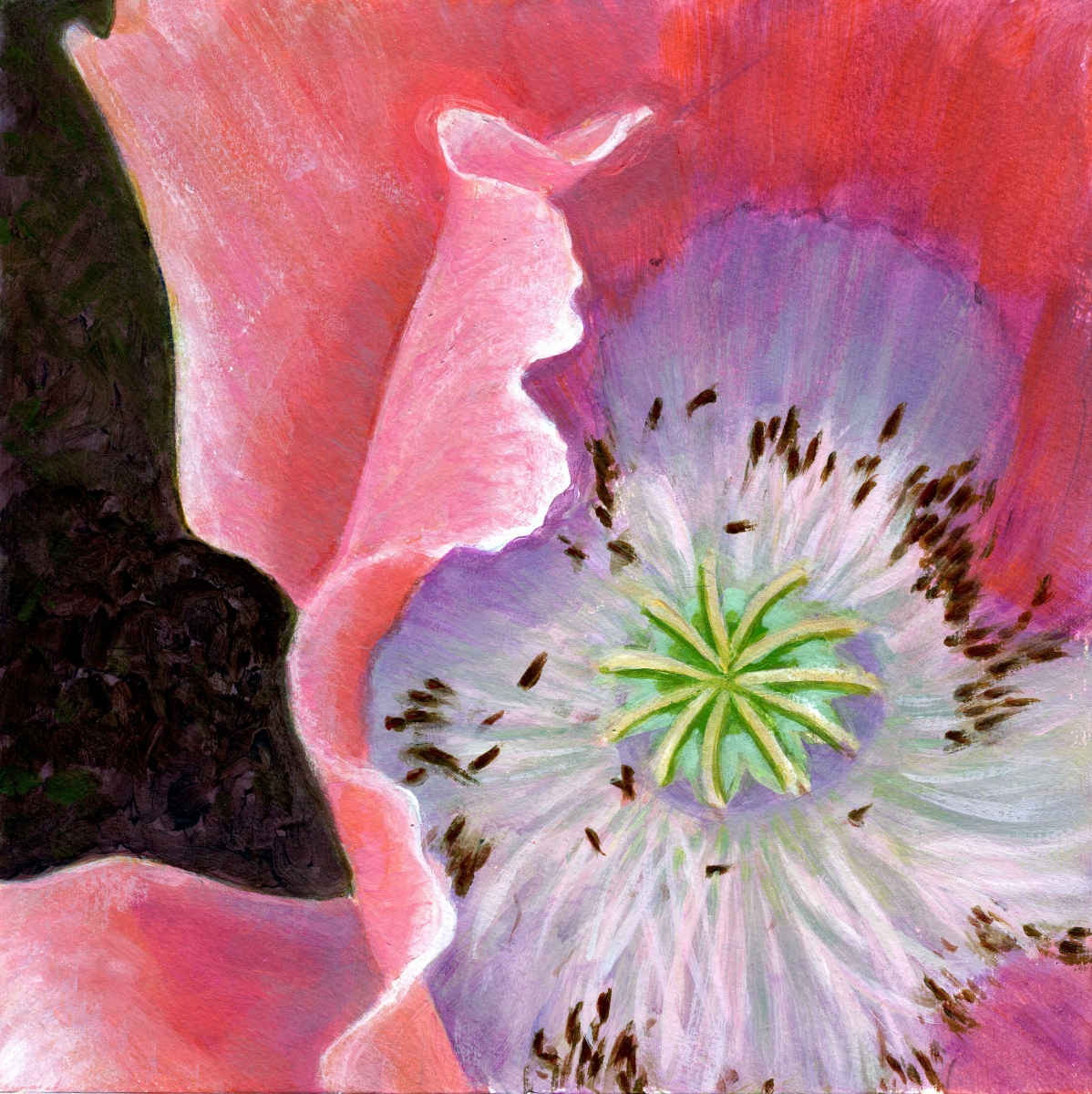 intimate view of pink poppy blossom (large view)