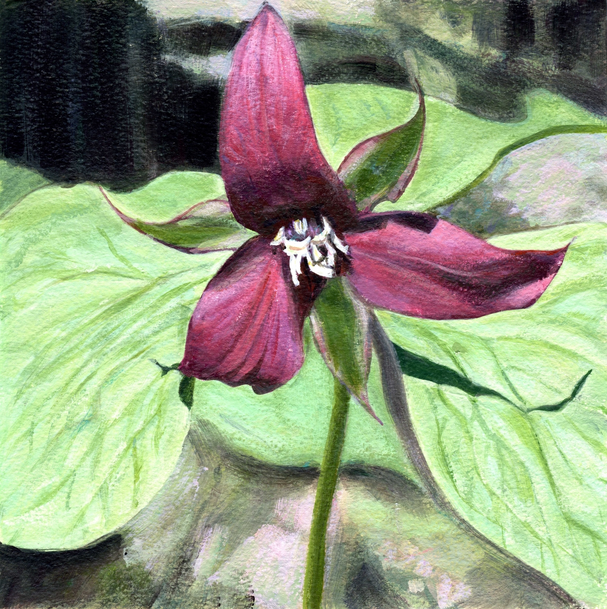 intimate view of red trillium (large view)