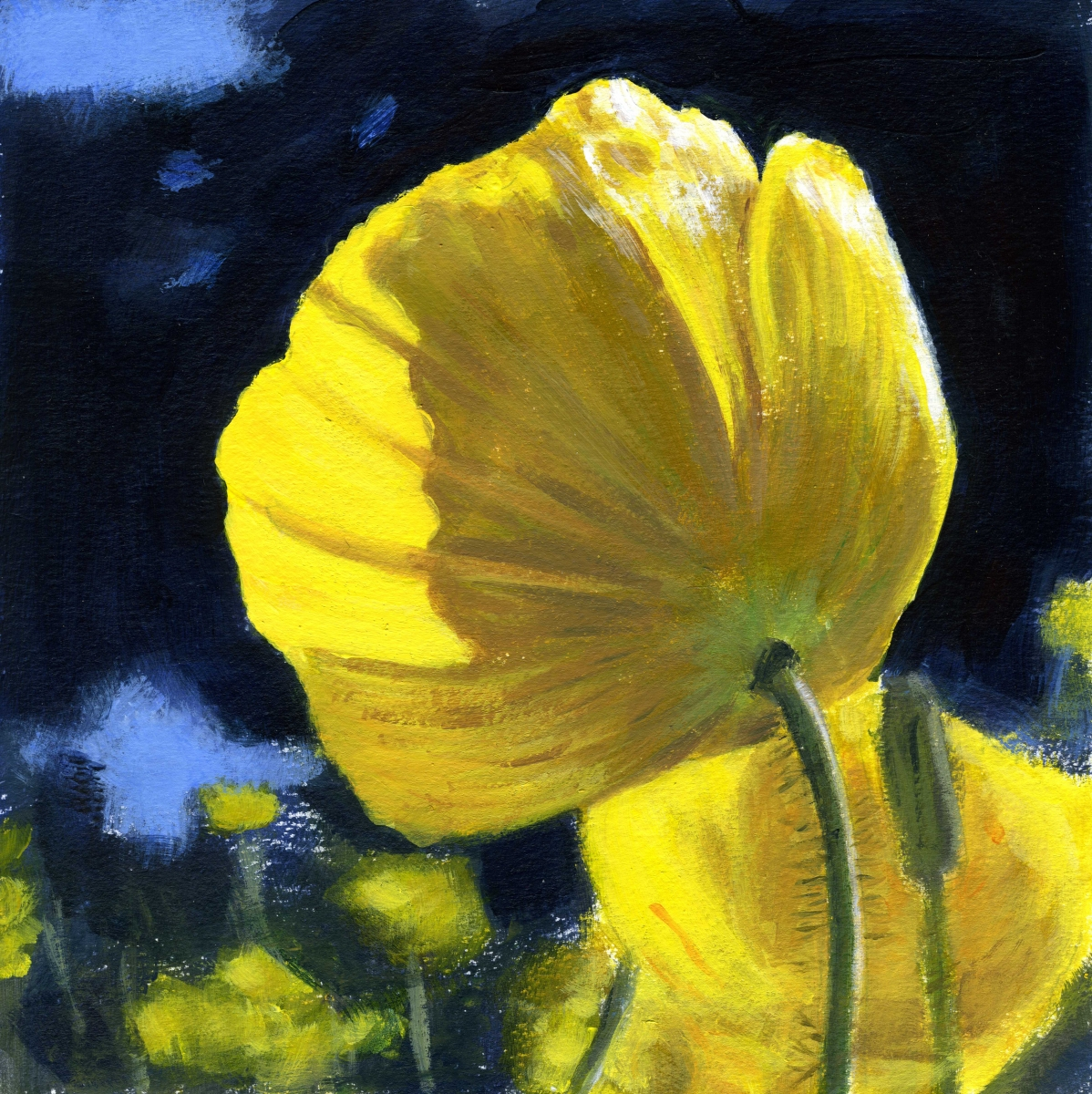 intimate view of yellow summer breeze poppies (large view)
