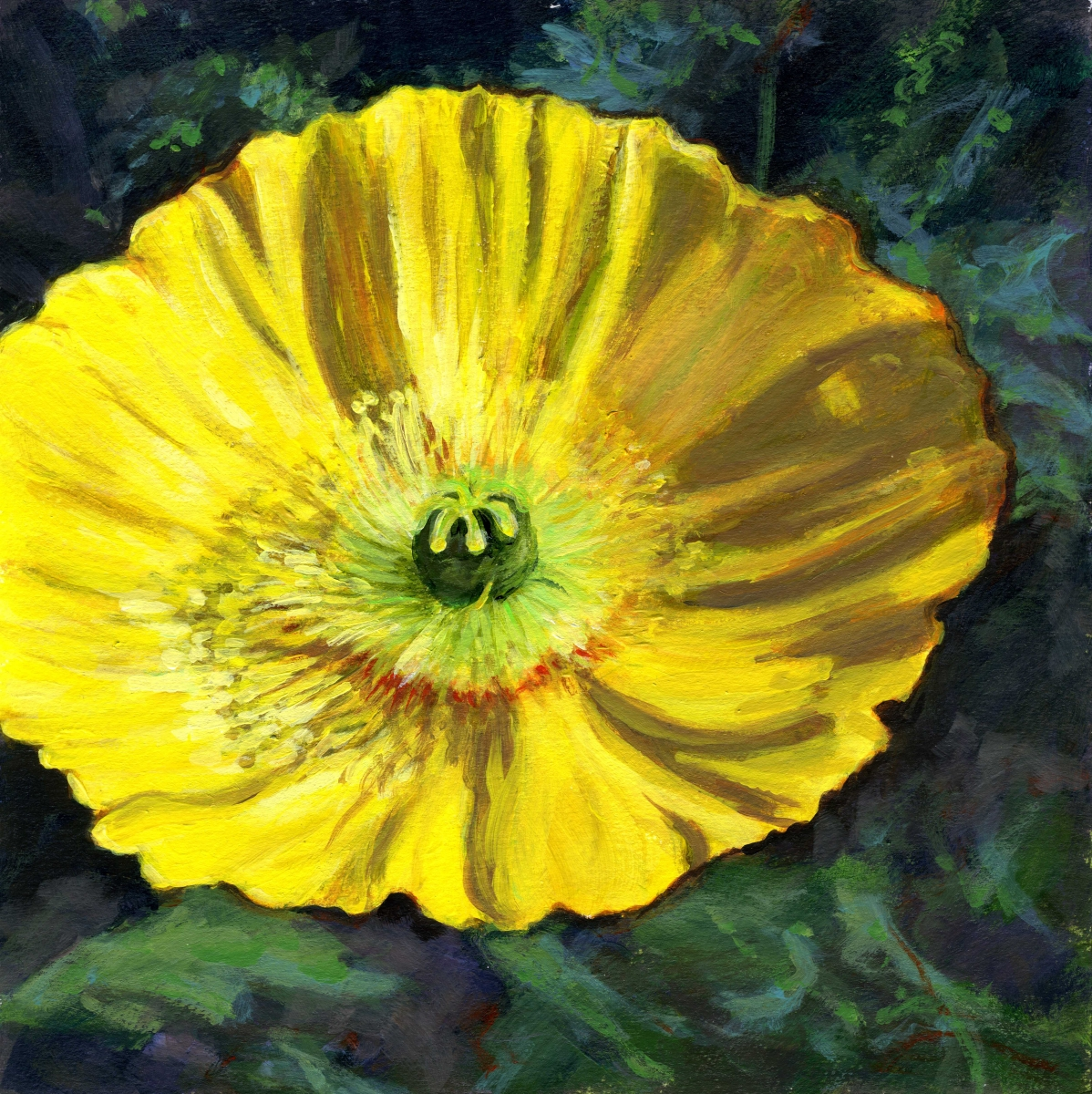 intimate view of yellow summer breeze poppy (large view)