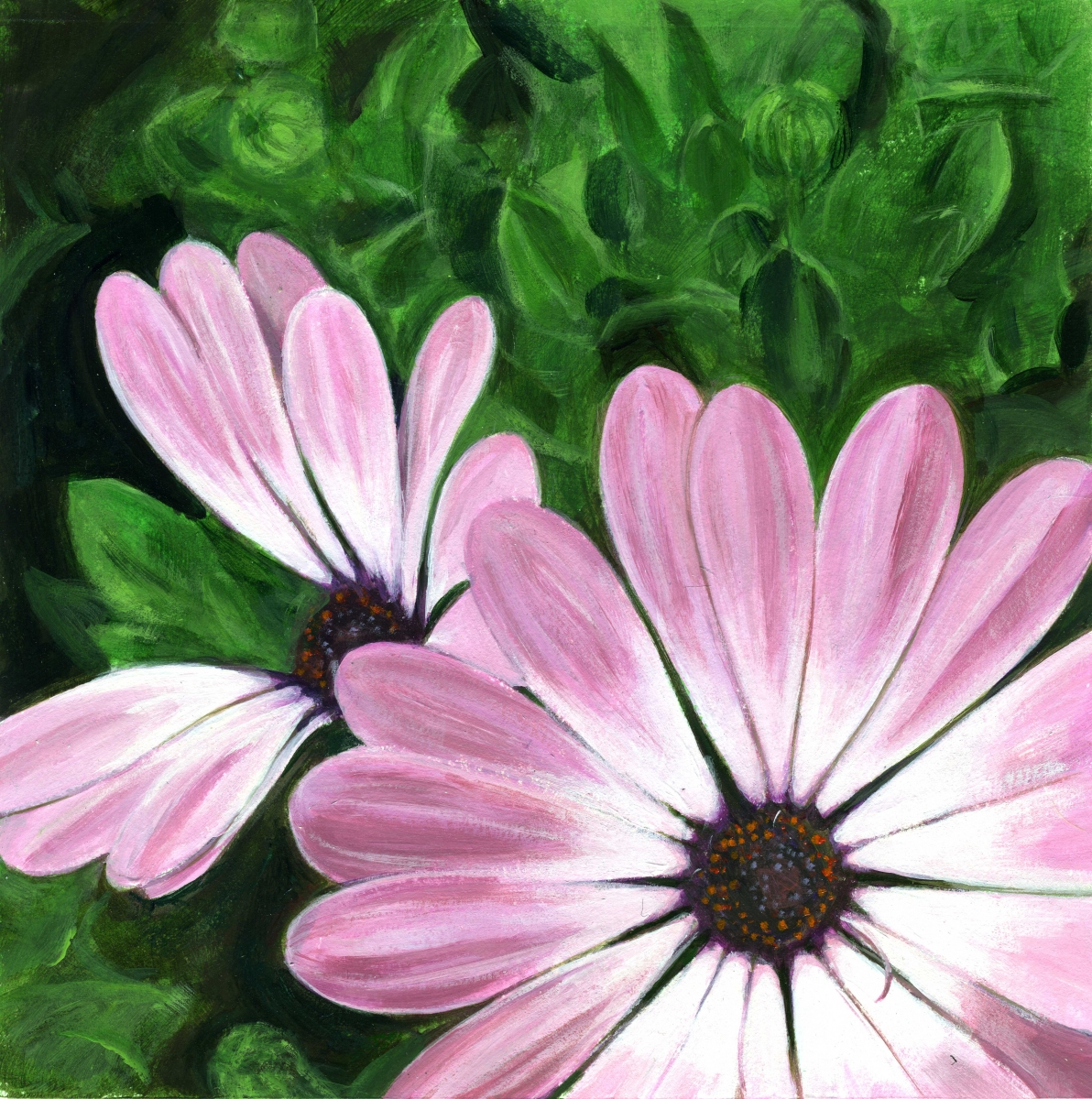intimate view of pink osteospermum (large view)