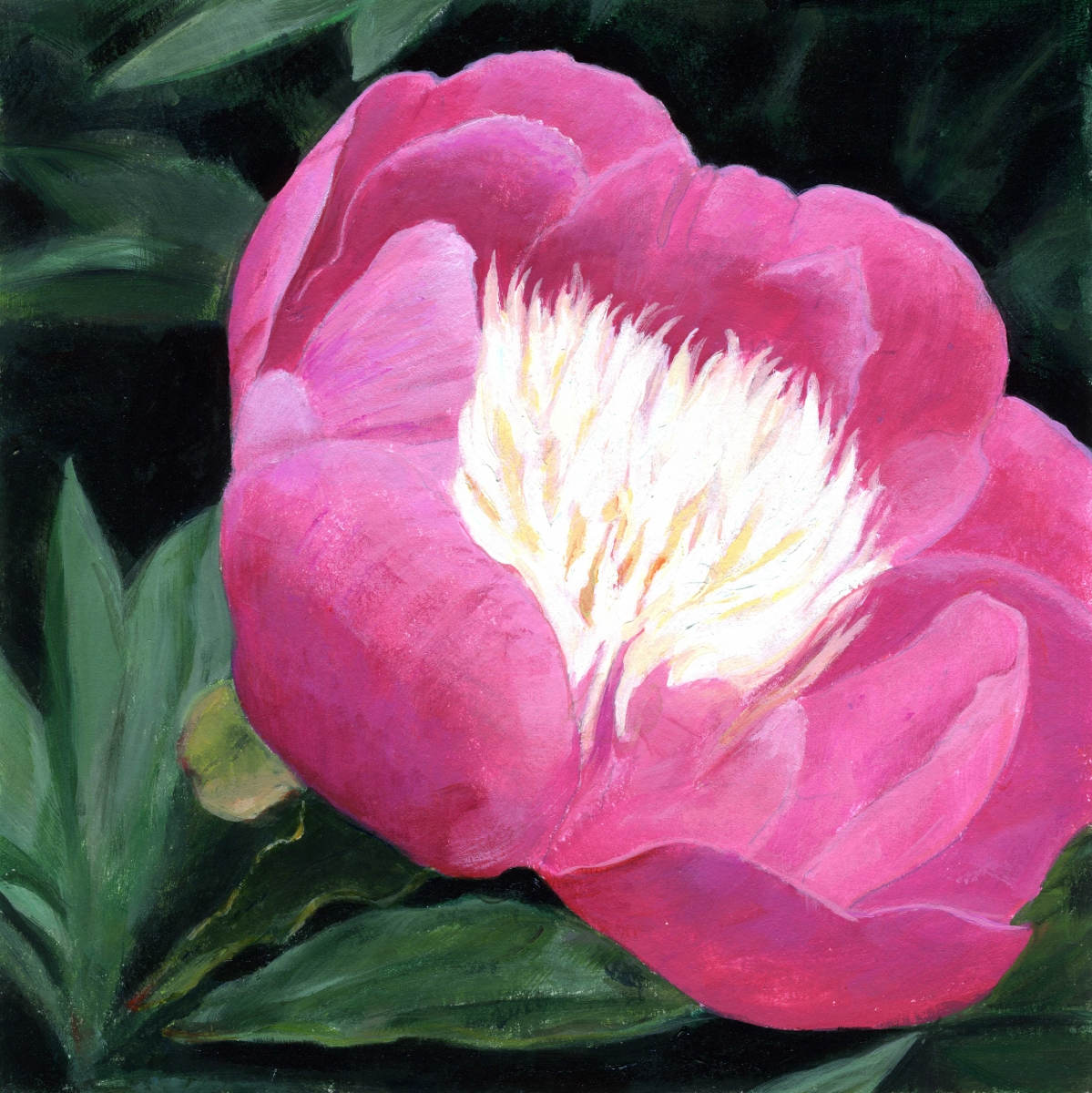 intimate view of pink peony (large view)