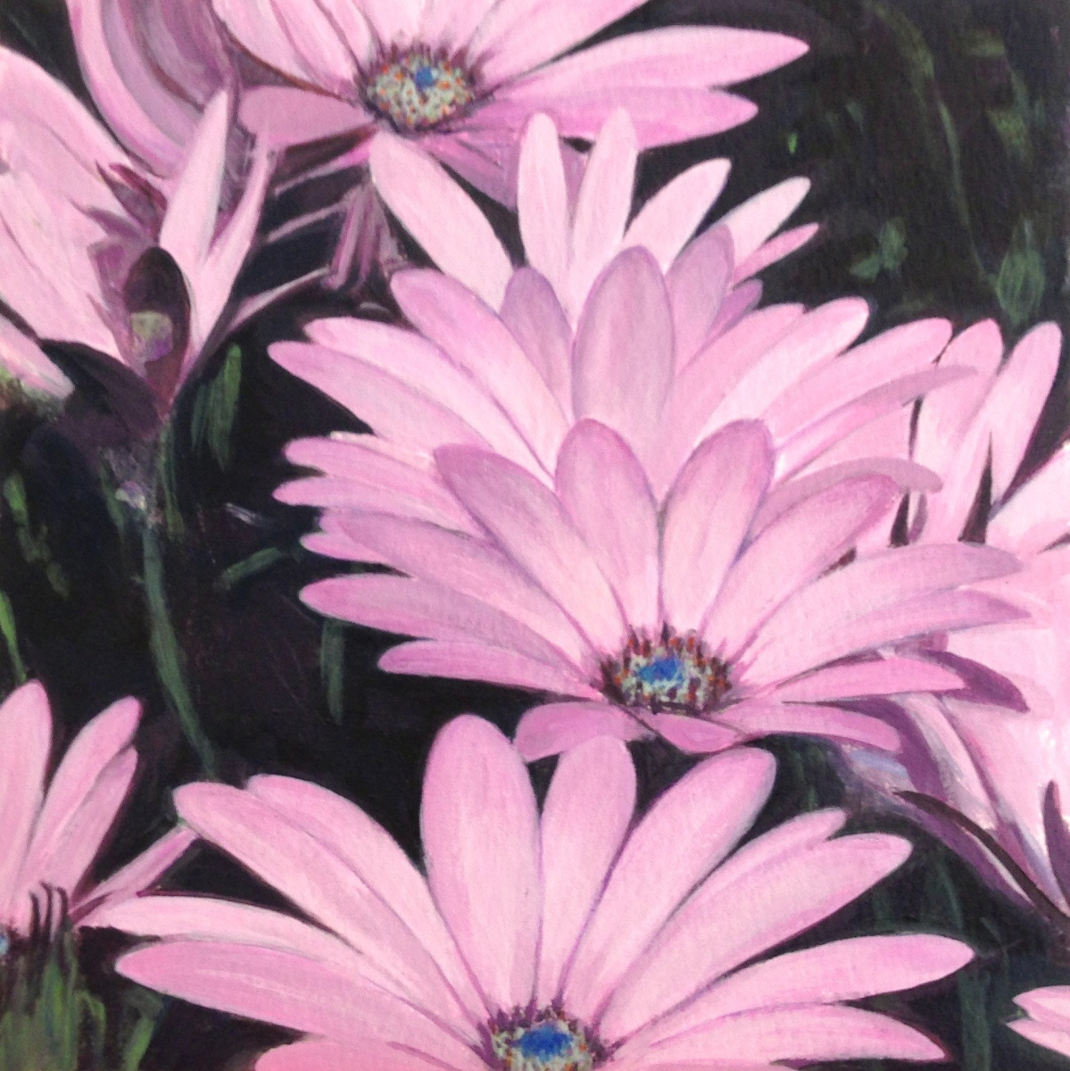 Cluster - Osteospermum (large view)