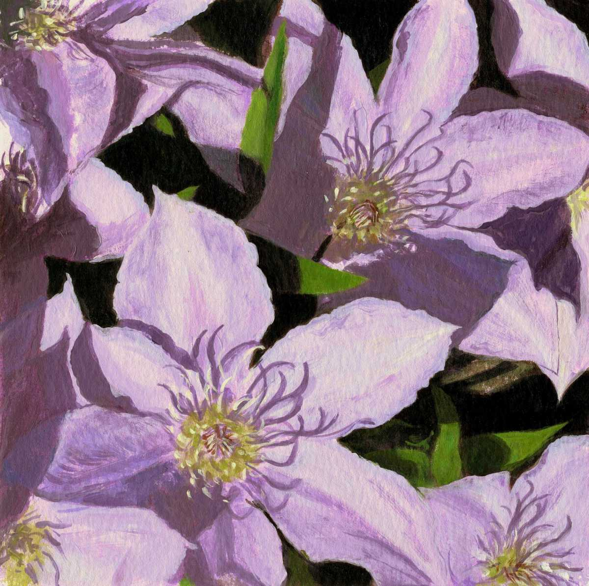 Lavender Mob - Clematis (large view)