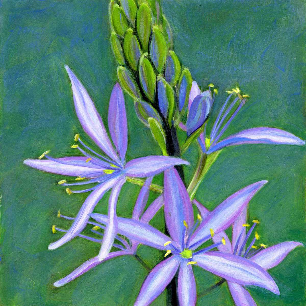 Star Appeal - Camassia (large view)