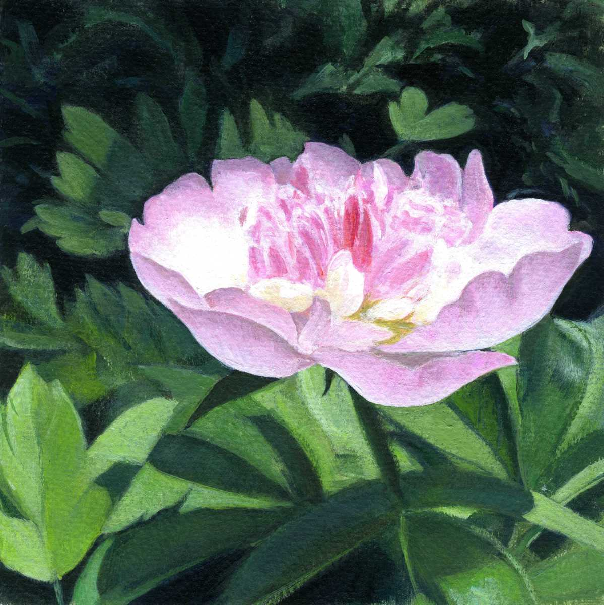 Pink Confection - Peony (large view)