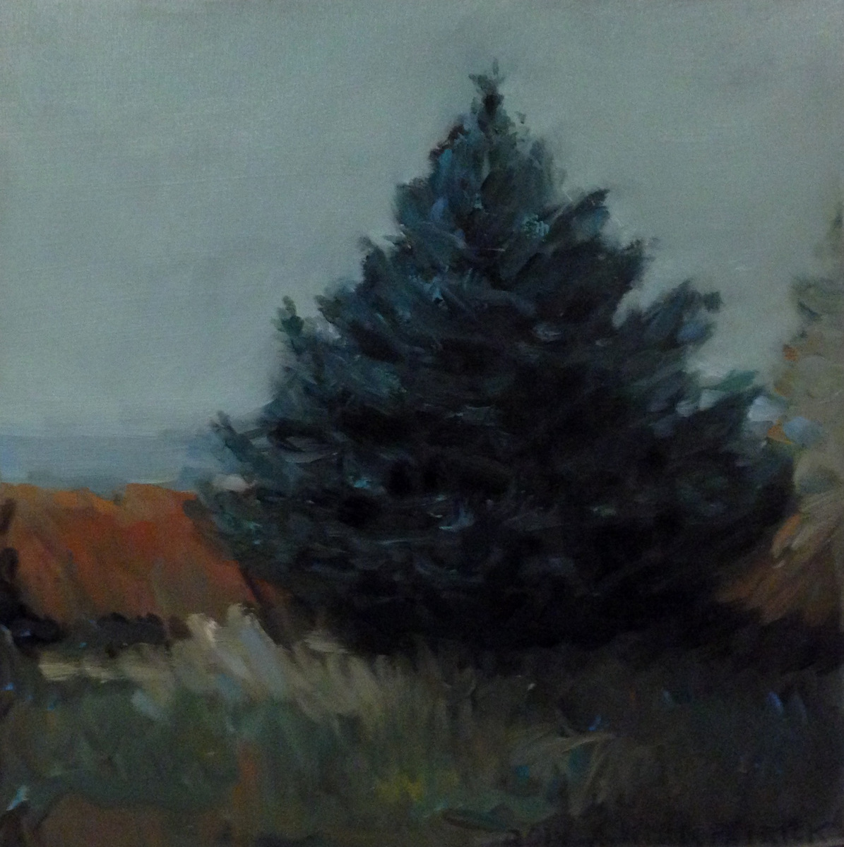 Blue Spruce (large view)