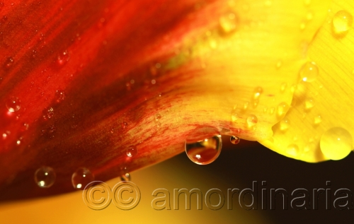 Droplets In Yellow & Red