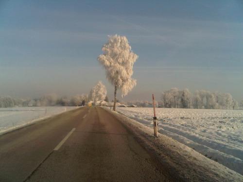 Winter Road by amy oestlund