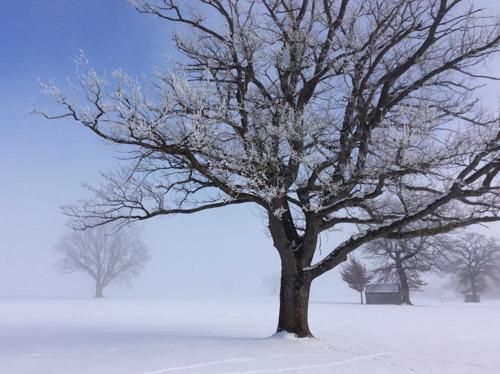 Mystic Fog by amy oestlund