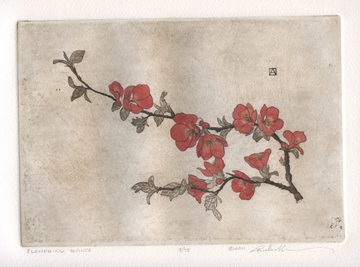 Flowering Quince (large view)