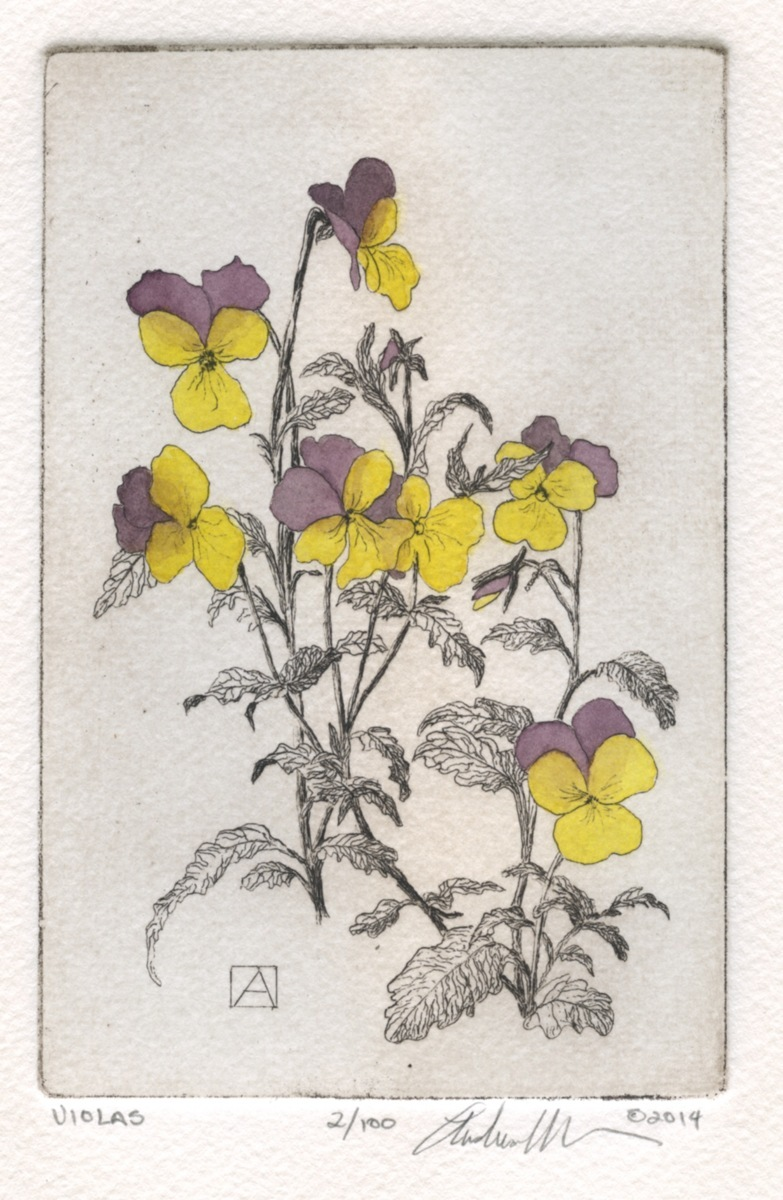 Violas  (large view)