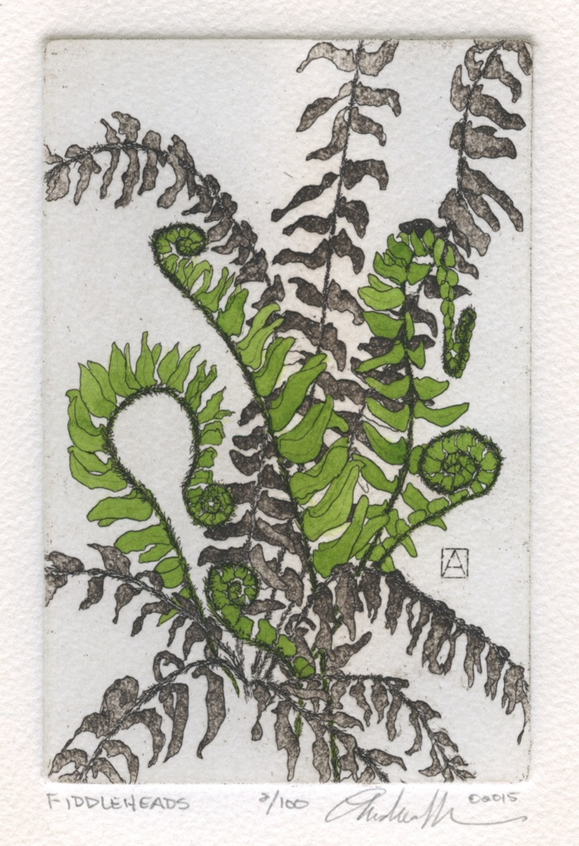 Fiddleheads (large view)
