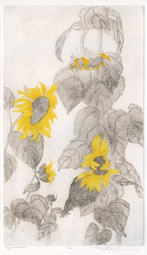 Hand-colored copperplate etching of sunflowers. (large view)