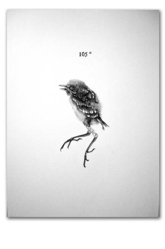 Phoenix 105 by Andrew K. Currey