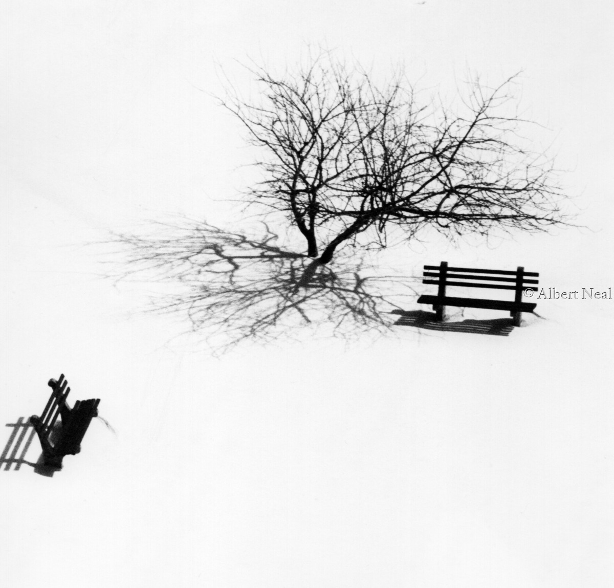Benches/ tree  in snow, Rahway N.J. (large view)