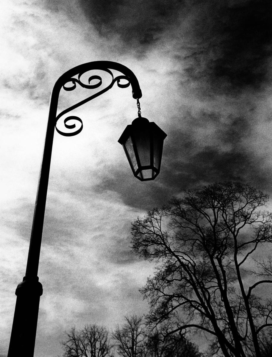 Lamp post and trees, Poughkeepsie , N.Y. (large view)