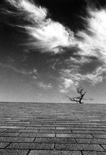 Roof with Tree, Poughkeepsie, N.Y. by Albert Neal